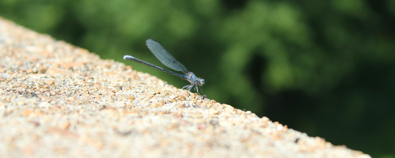dragonflyCarousel 01