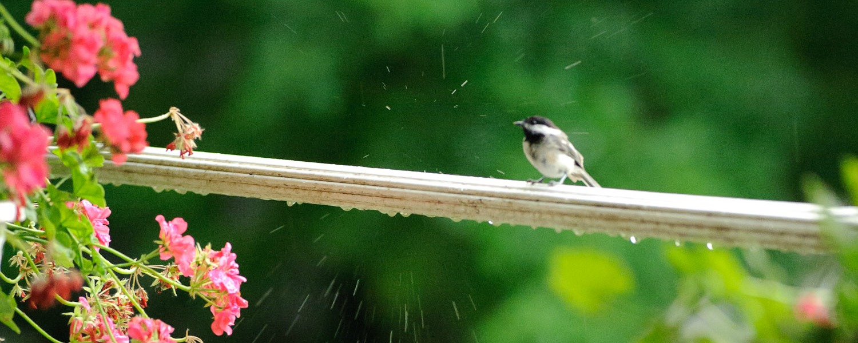 rainbirdCarousel 04